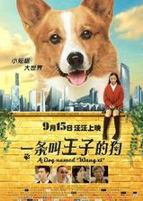 一条叫王子的狗海报
