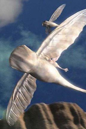 飞翔的鲸鱼